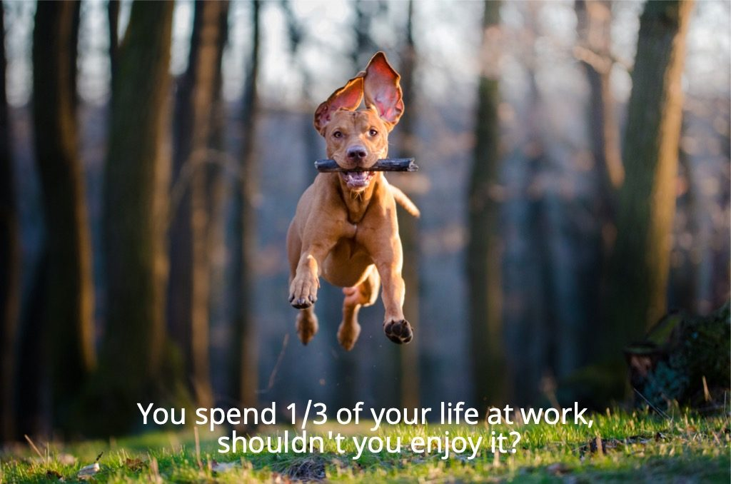 You spend one third of your life at work, shouldn't you enjoy it?